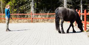 Femke Beurskens fick prova att jobba med en av terapihästarna på Ingrid Bergs gård utanför Hassela.
