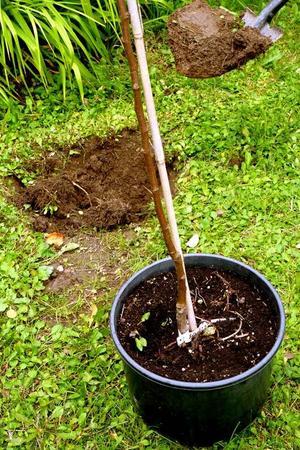 Gropen grävs