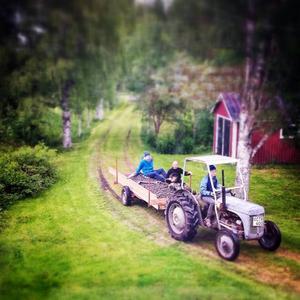 Grållen får jobba i Havsnäs.