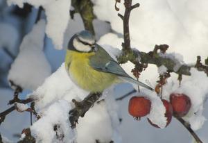 Tänk att få besök av en så söt fågel i trädgården.