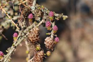 Blommor i Lärkträd