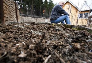 """Redo för en ny säsong. """"Här kommer det rabarber, gräslök, lök, potatis, morötter, dill och persilja, sådant för daglig användning"""" säger Björn Qvarfort och visar över kolonilottens nakna jord. Foto: Tony Persson"""