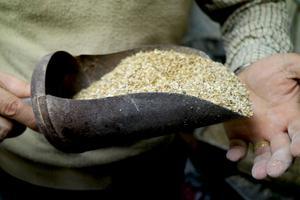 Malt är en av de ingredienser som krävs för att brygga öl, säger Pär.