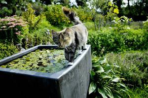Debatten om katter fortsätter.