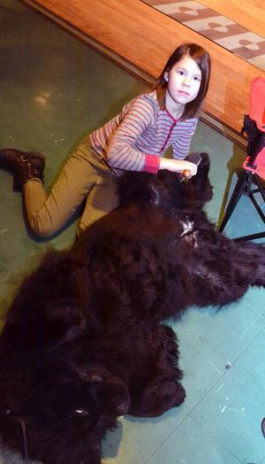Tuva Mattsson kammade till New Foulandshunden Daisy.