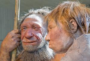 Från neandertalaren har vi ärvt ungefär en femtedel av våra gener.