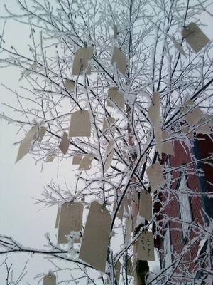 Mängder av olika önskningar blev det på trädet i Lillhärdal.