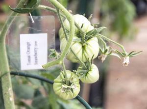 Berit är noga med att märka upp vad hon odlar. Under hösten utvärderar hon alla sina odlingar och för noggranna anteckningar så hon vet vad hon ska odla året därpå.