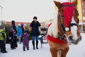 Hästen Hera väntar tålmodigt på att nästa gäng av barn och föräldrar ska våga sig upp i släden där bak. I lila overall står Alva Lindsten 3 år och mamma Sofia Sundberg och gör sig i ordning inför en tur med Hera.