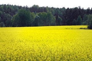 Cirka 40 procent bor utanför Norrtälje stad och de större tätorterna vi har i kommunen. Därför är vi av den bestämda uppfattningen att den naturliga utvecklingsmotorn är landsbygden, skriver fem företrädare för ROOP.