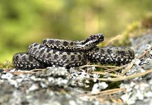 Bor den här i husgrunden? Ovälkomna grannar i form av ormar och myror är svårt att gardera sig mot.