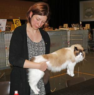 Domare Malin Sundqvist bedömer ragdoll-katten Daisy. Daisy gillar det inte utan spänner sig och fräser.