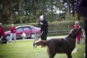 Det var många hundar och hundägare som samlats på campingen i Ramsjö för att delta i kursen rallylydnad.