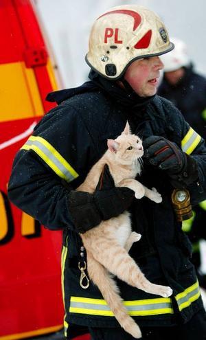 Peter Lindgren från Räddningstjänsten räddade en katt från en lägenhet i det brinnande huset.