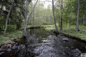 Del av Holms naturområde arrenderas i sin tur av Holms kultur - och fornminnesförening.