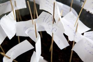 Frön till förändring får besökarnaplantera på MalinMatilda Allbergs utställning