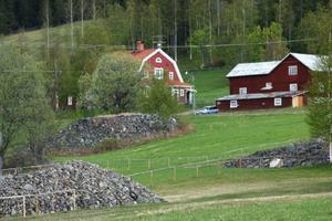 """Några av de många stenrösen som finns """"väst i byn""""."""