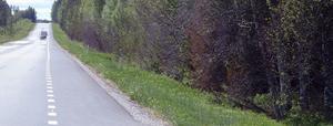 Den här bilden är tagen på E 14, raksträckan mellan Mälgåsen och Stavre, norr om Bräcke. Lägg märke till hur m ånga av träden vid vägkanten saknar blad eller har skrumpna blad. Fenomenet kan noteras på vegetationen längs hela sträckan mellan Medelkpadsgränsen och Brunflo. Även på riksväg 87 mellan Östersund och Bispgården är vegetationen tydligt påverkad.