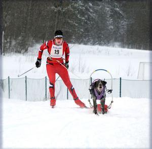 Johan Sjölund, som hållit på med draghundsport så länge ha kan minnas tycker att det är en väldigt fartfylld och rolig sport. Snart väntar tävlingar, som här, också på snö.