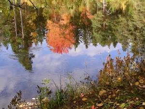 Hösten är vacker även om den ses upp och ner