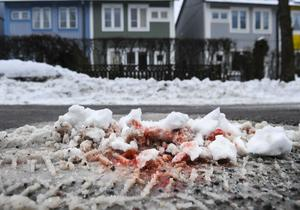 Blodspår i snön vid platsen där två personer sköts ihjäl i närheten av en grundskola i Kista i nordvästra Stockholm.
