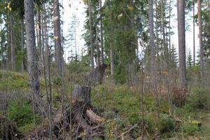 bilden är tagen i skogen vid avesta vattentorn. var lite otäkt i början innan man såg att det var en rorvälta.