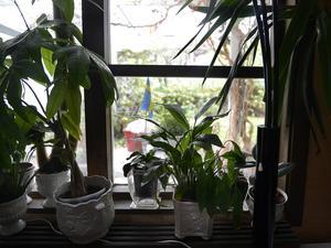 I fönstret som är 60 gånger 55 centimeter tog sig tjuven sig in.
