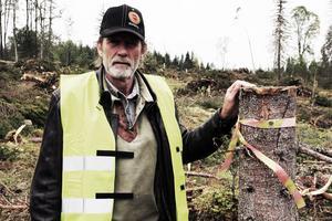 Rolf Nyström visar en av de markeringar, en hänsynsstubbe, som visar var gränsen går mot själva gruvområdet där man tar extra hänsyn under avverkningen av främst gran.