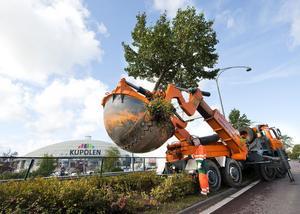Här ska det byggas nya vägar. Därför flyttas nu 21 träd från riksvägarna runt Kupolen.