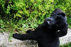 Livet leker för Chilla nu 12 veckor, nyfiken på allt:)