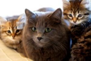 Hittills har fyra katter utsatts för samma grymma behandling. ARKIVFOTO: TERESE AHLIN