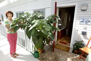 Ljust. På loftgången mellan lägenheterna har alla en egen farstukvist. Här umgås man med grannarna. Gunnels ståtliga Änglatrumpet skvallrar om att även växterna stortrivs.