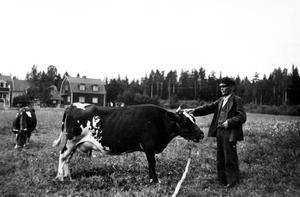Ängen är nu villatomter. Carl Josef Larsson arrenderade herrgårdsjorden på Malmaberg från 1921 till 1930. Ängen där han poserar med Brunetta låg i närheten av Svarvargatan på Malmaberg.