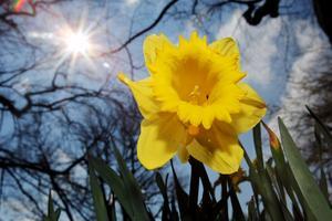 Solen kommer att lysa över Hälsingland i påsk.