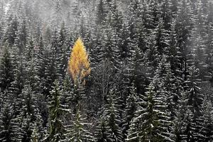 Skribenten uppskattade Oksanens ledare om skogen den 8 januari, men hade gärna sett en dimension till.
