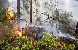 Branden förstörde stora värden av naturlivet. Även denna brand är tagen vid Öjesjön 2014.