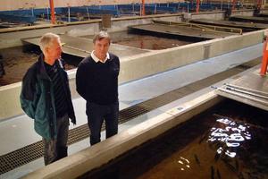 Vattenbrukscentrum Norrs platschef i Kälarne, Torleif Andersson, och konsulten Birger Mangs ser fram emot nytt säkert kallvatten i anläggningen. Foto: Ingvar Ericsson