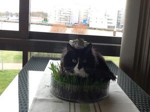 Ser ni kycklingen i Påskgräset? :-) Svårt att se när Frasse la sig över den :-)