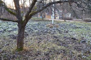 Den här Turbobon har fått i stort sett hela sin trädgård förödd av vildsvinens framfart.