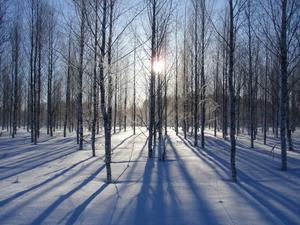 Sista vinterdagen?? Bilden tagen utanför Hedensberg. Foto: Pertti Yliniemi
