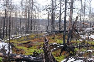 Brandlöpet var mer än en tävling en påminnelse om att uppskatta den natur vi har samt om den förödelse som drabbade området 2014. Bild: Mattias Nörgaard