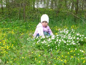Lilla Elise var på upptäcksfärd i skogen, där hon hittade massa vitsippor.