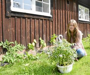 Nybörjare. Amanda Kroon driver stadsodling och lär sig nya odlingsknep genom att prova sig fram.