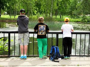 Ankdammen är populär att fiska i. Nyligen sattes 100 kilo regnbåge ut där och i Kanalen.