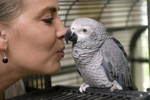 Jacko-papegojan Maja är hemma hos matte Caritha Bergqvist igen efter en natt i det fria.
