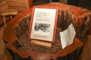 I ekohuset finns ett utställning om skogens ekosystem som byggts upp av personer som även jobbat på Jamtli.