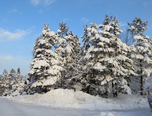 Så vackert med all polarsnö och lite milt solsken.