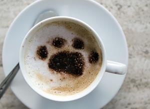 """Katte latte"" på Café Miao i Köpenhamn."