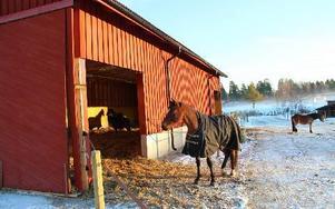 Stallet kan användas när hästarna så önskar det. X