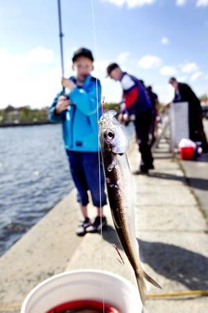 Elian Åslin från Iggesund hade en lyckad fiskestund på söndagen.